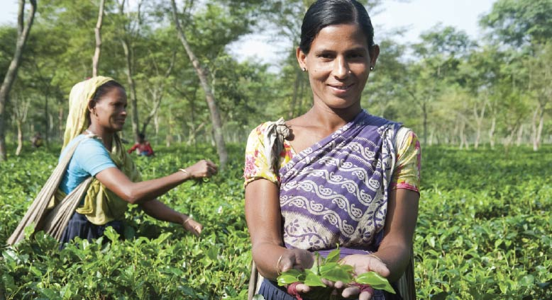 Indian woman smiling while holding handful of freshly plucked tea leaves.